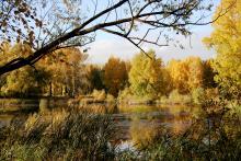 Сибирский ботанический сад ТГУ подарил городу около 30 саженцев декоративных деревьев и кустарников.