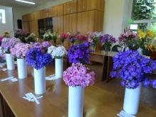 28–29 июля в Сибирском ботаническом саду состоялась выставка–фестиваль декоративных растений «Вальс цветов»