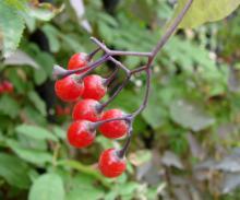 В Ботсаду ТГУ появилась новая экспозиция «Опасные растения»
