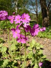 Весенний вальс цветов в Заповедном парке