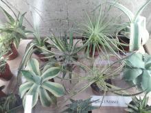 С 5 по 7 апреля в Сибирском ботаническом саду прошла выставка кактусов и суккулентов
