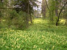 Фестиваль весенних цветов в Сибирском ботаническом саду