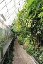 Сахарный тростник и растение-муравейник войдут в экспозицию СибБС ТГУ