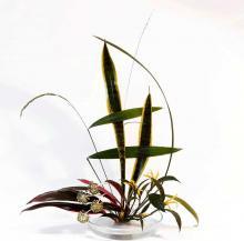 Объявляется новый набор на флористические курсы в &laquoЯпонская аранжировка - икэбана школы Согэцу: Морибана&raquo