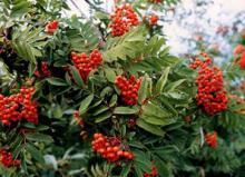 Ботсад ТГУ возродил питомник для выращивания зимостойких растений