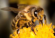Ученые ТГУ знают, как делать правильный мед