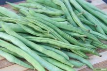 Студенты-агрономы выращивают овощи с антиоксидантными свойствами