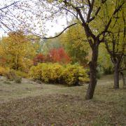 Вид на экспозицию Восточная Азия со стороны яблоневой аллеи
