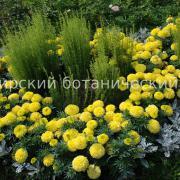 Набор Ромбы (желто-серебристый вариант)