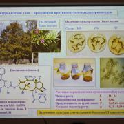 Получение культуры ткани тиса ягодного - одно из перспективных направлений биотехнологии